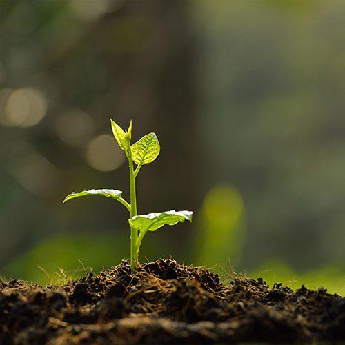 Abragon - Über uns - Wachstum